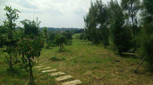 Polyculture Fruit Orchard